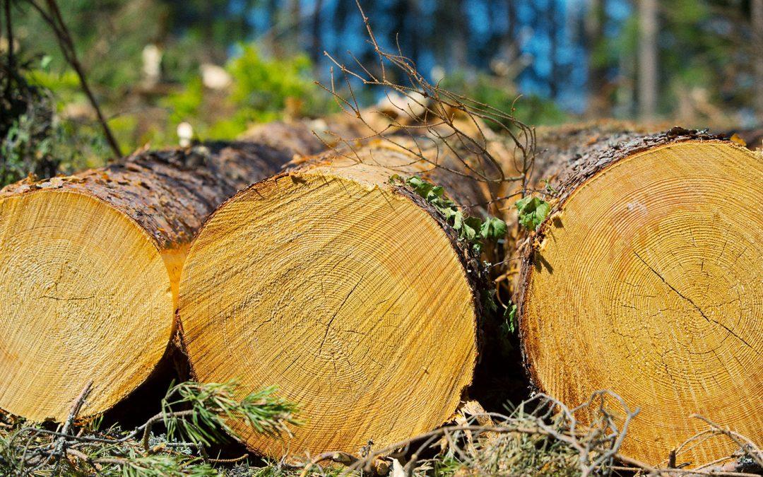 Tilastointi vääristää puukauppaa
