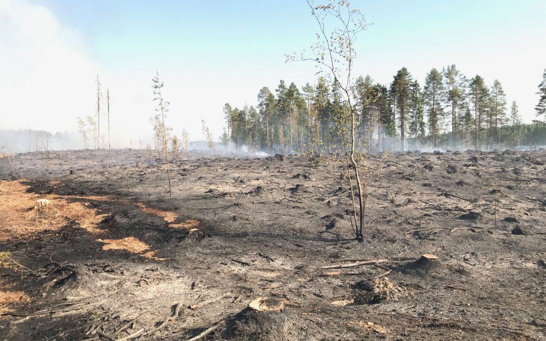 Kulotus tukee metsän kasvua ja monimuotoisuutta