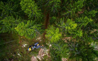 Metsät ovat arvokas osa kunnan omaisuutta