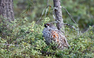 Luonnon monimuotoisuus on menestyvän metsäelinkeinon perusta