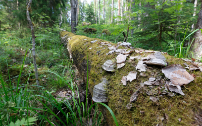 The biodiversity strategy impoverishes the forest bioeconomy
