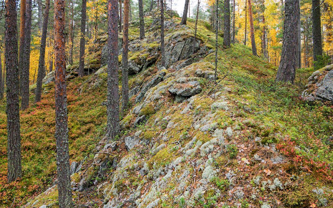Metsänomistajille lisää tietoa luonnonhoidon merkityksestä