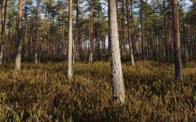 Sahat kouluttavat suometsätalouden ja eri-ikäisrakenteisen metsätalouden osaajia